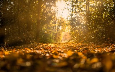 Autumn Leaves and Barrenness